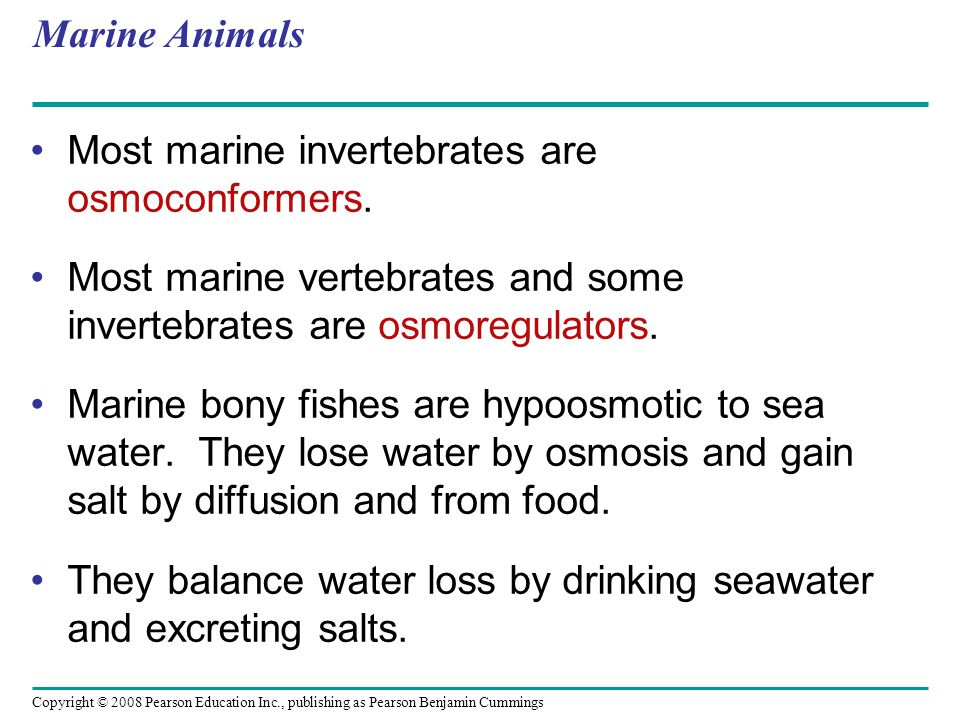 Marine Animals Most marine invertebrates are osmoconformers. Most marine vertebrates and some invertebrates are osmoregulators.
