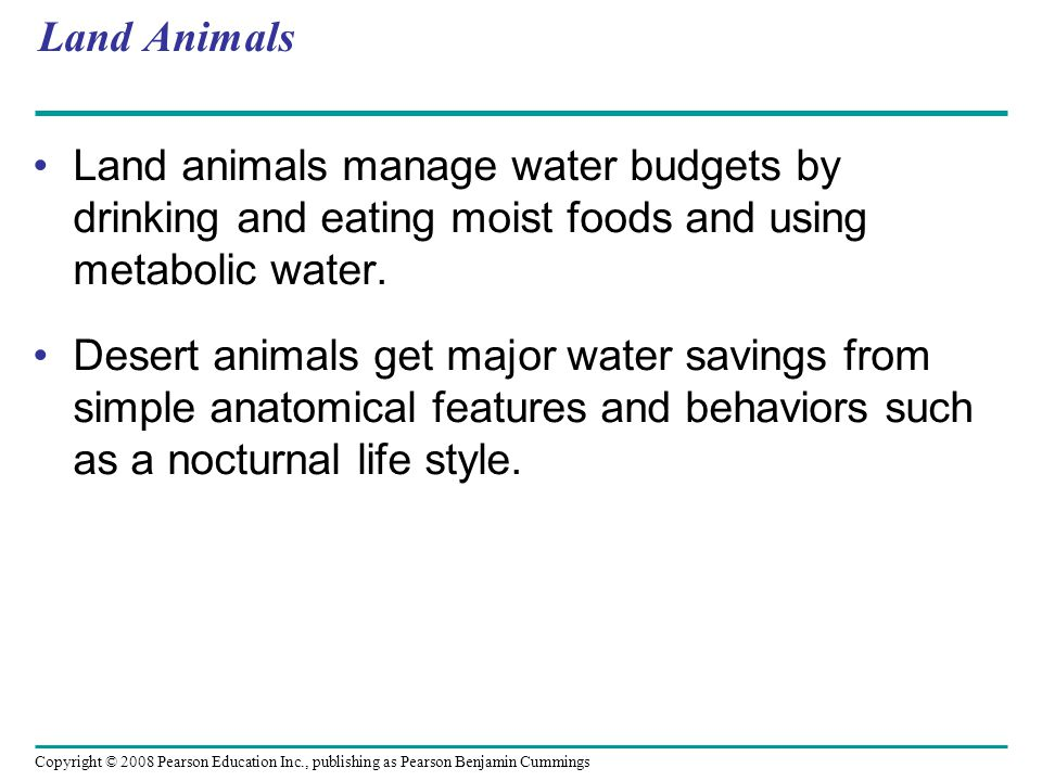 Land Animals Land animals manage water budgets by drinking and eating moist foods and using metabolic water.