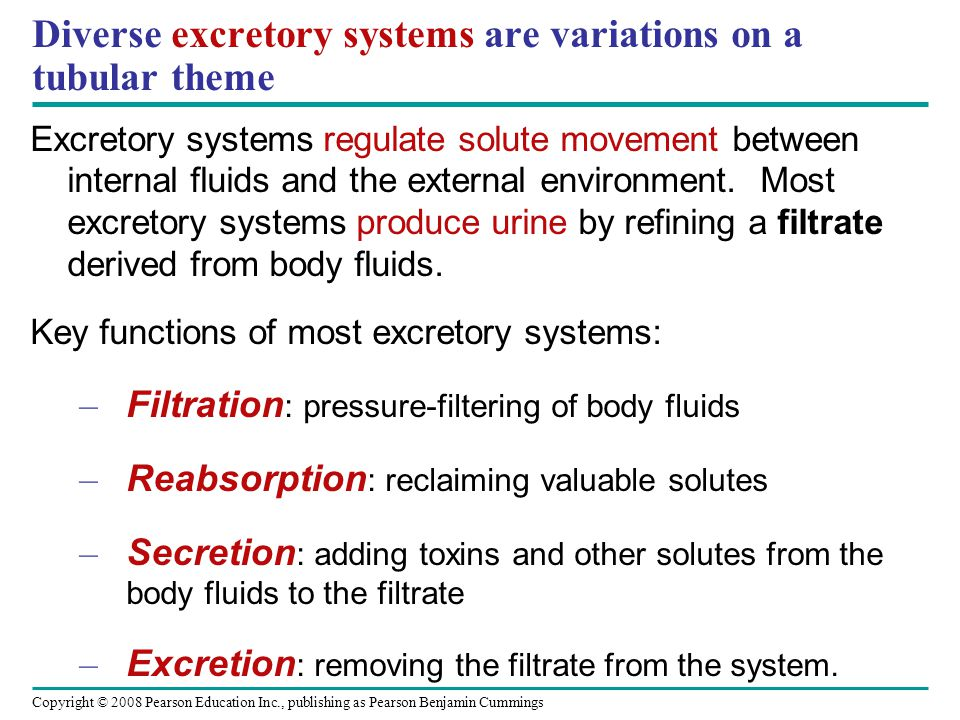 Diverse excretory systems are variations on a tubular theme