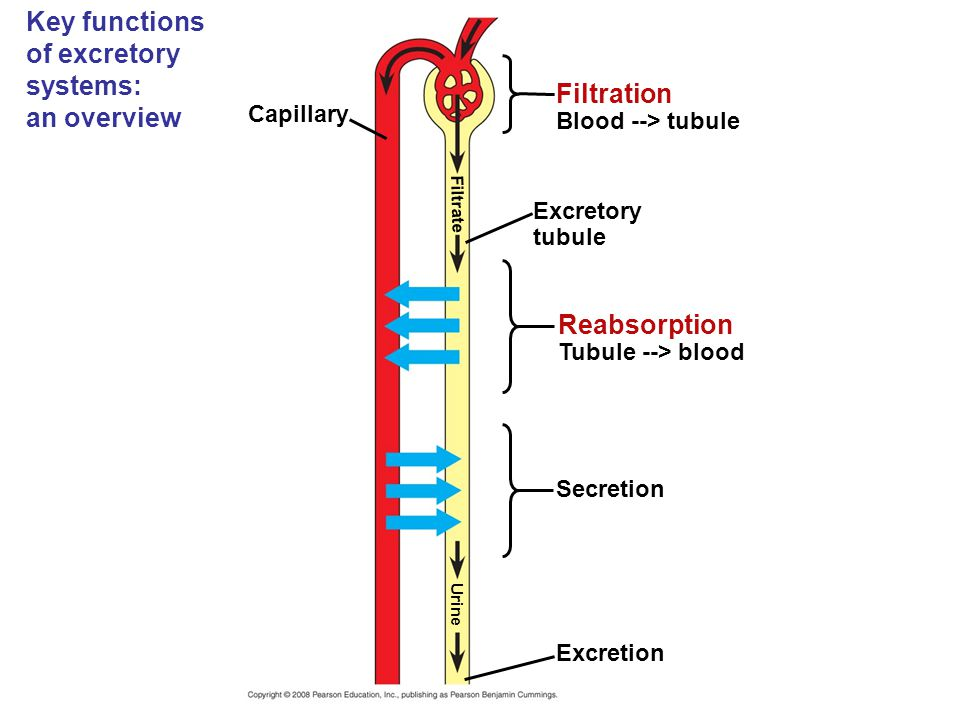 Key functions of excretory systems: an overview