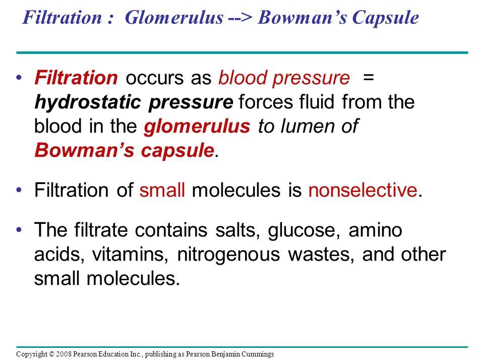 Filtration : Glomerulus --> Bowman's Capsule