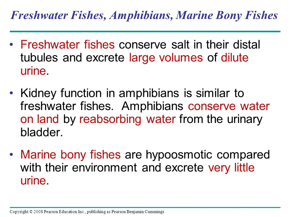 Freshwater Fishes, Amphibians, Marine Bony Fishes