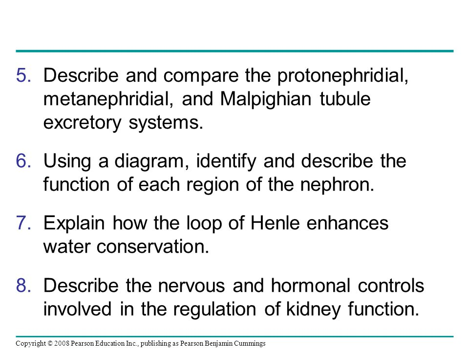 Describe and compare the protonephridial, metanephridial, and Malpighian tubule excretory systems.