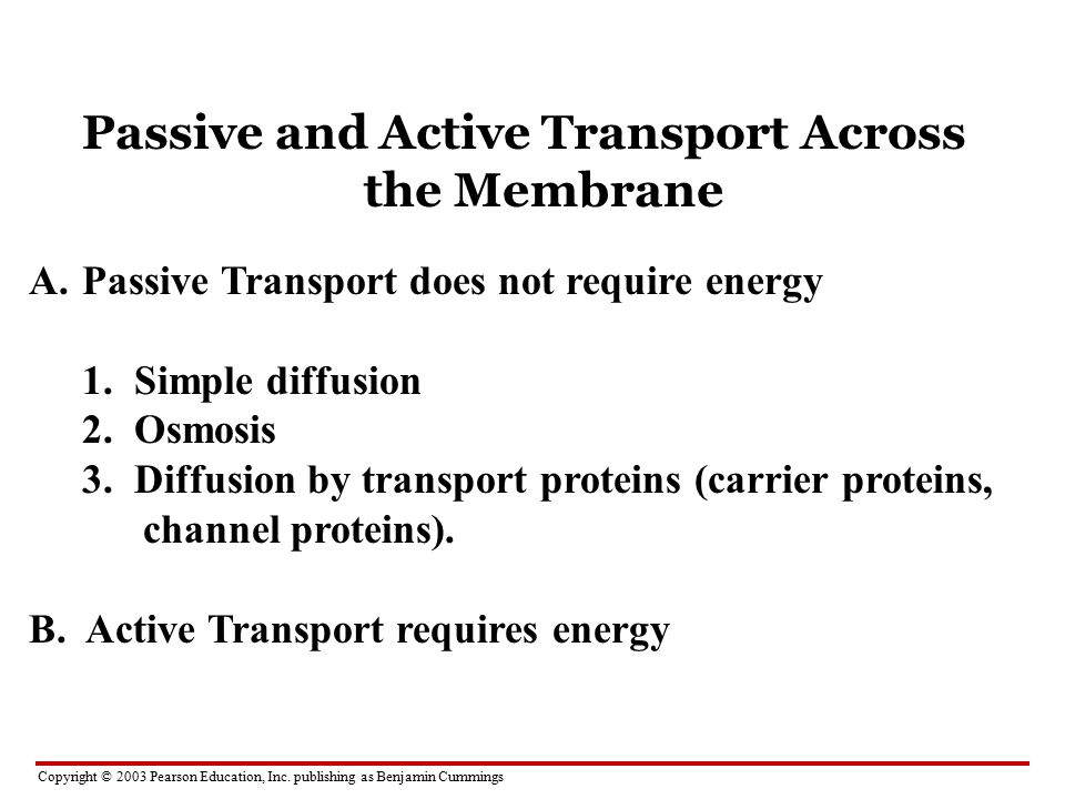 Passive and Active Transport Across the Membrane