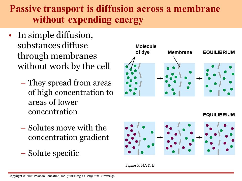 Passive transport is diffusion across a membrane without expending energy