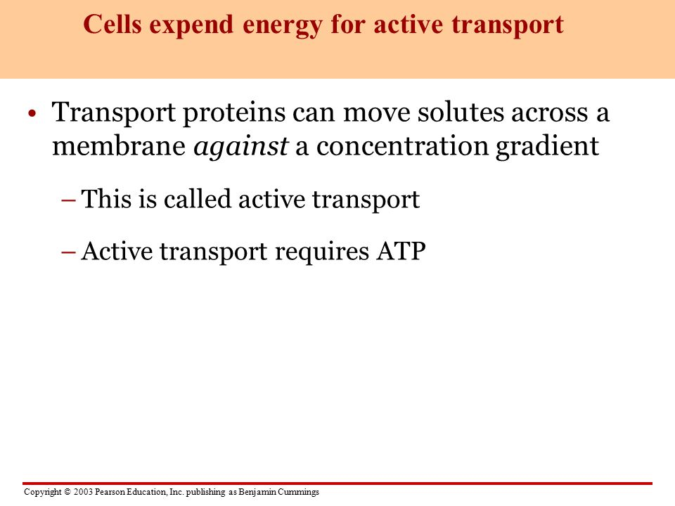 Cells expend energy for active transport