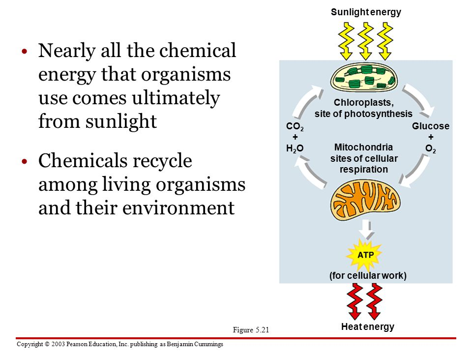 Chemicals recycle among living organisms and their environment