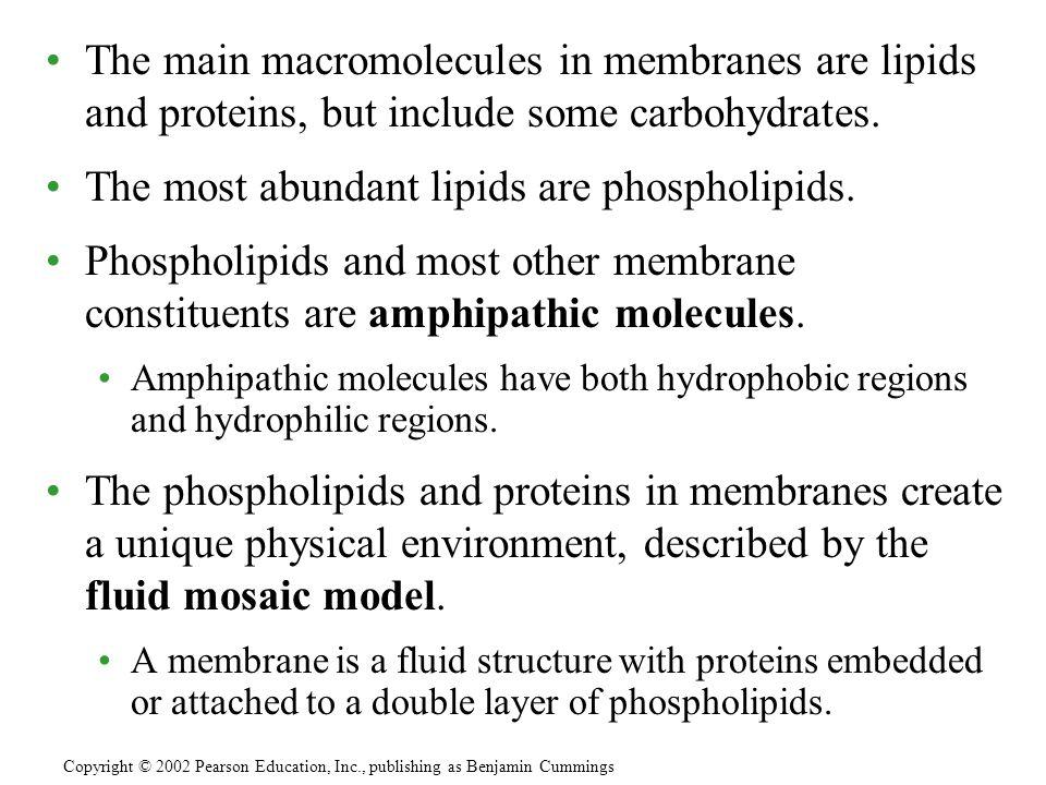 The most abundant lipids are phospholipids.