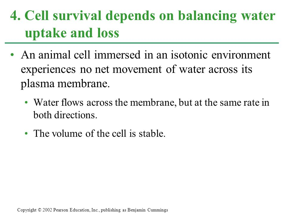 4. Cell survival depends on balancing water uptake and loss
