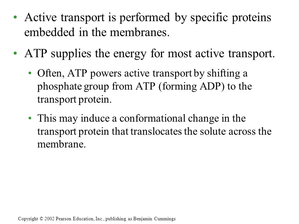 ATP supplies the energy for most active transport.