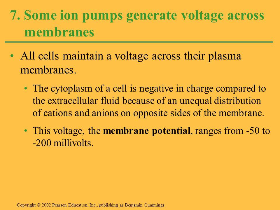 7. Some ion pumps generate voltage across membranes