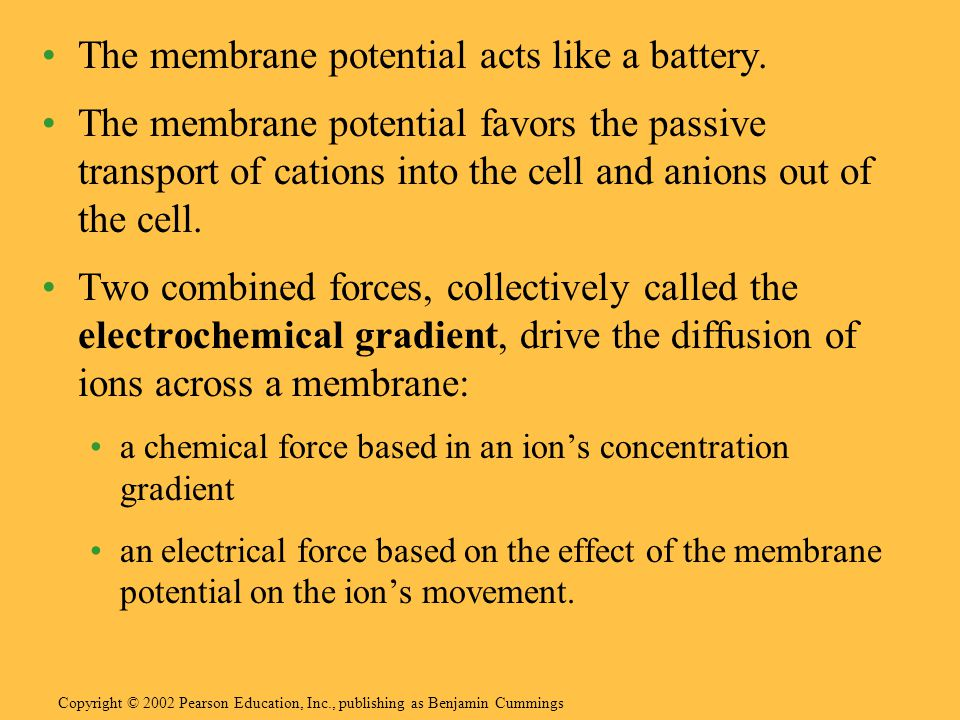 The membrane potential acts like a battery.