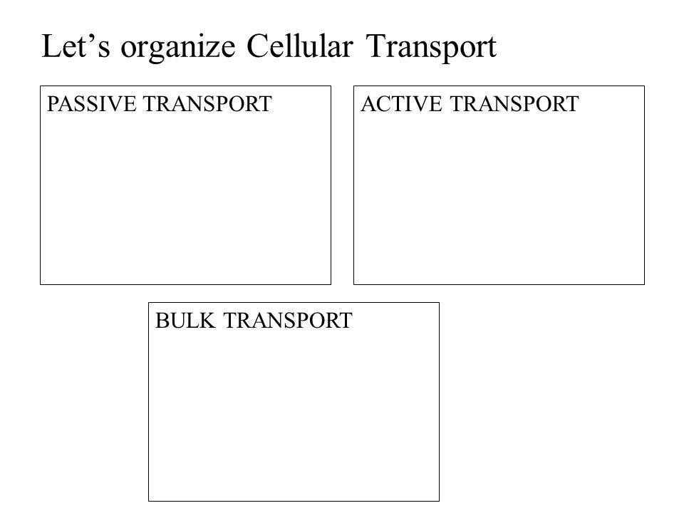 Let's organize Cellular Transport