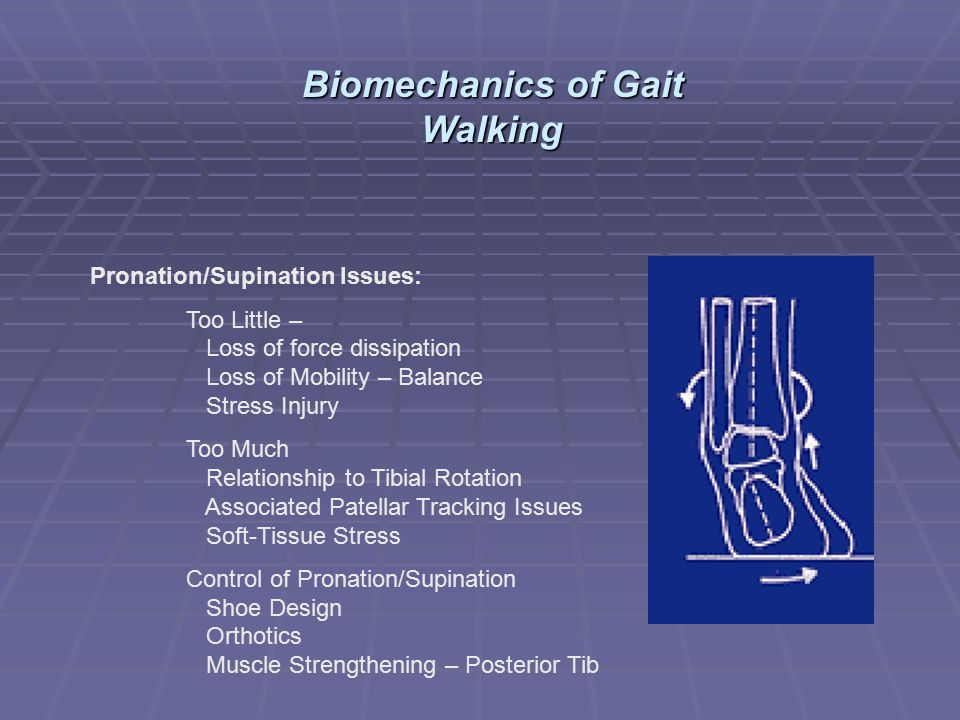 Biomechanics of Gait Walking
