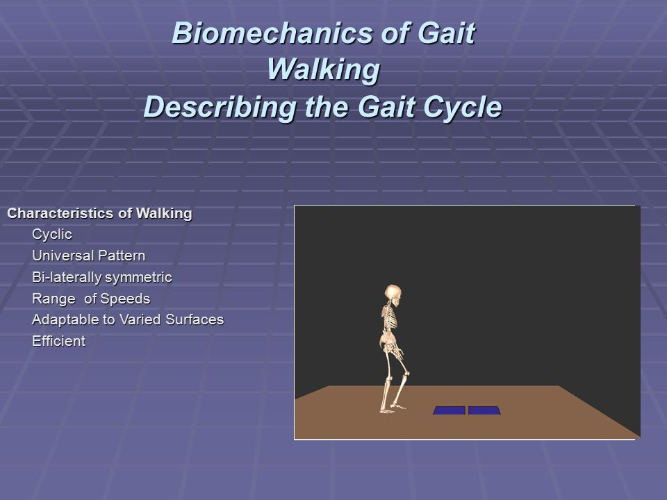 Describing the Gait Cycle