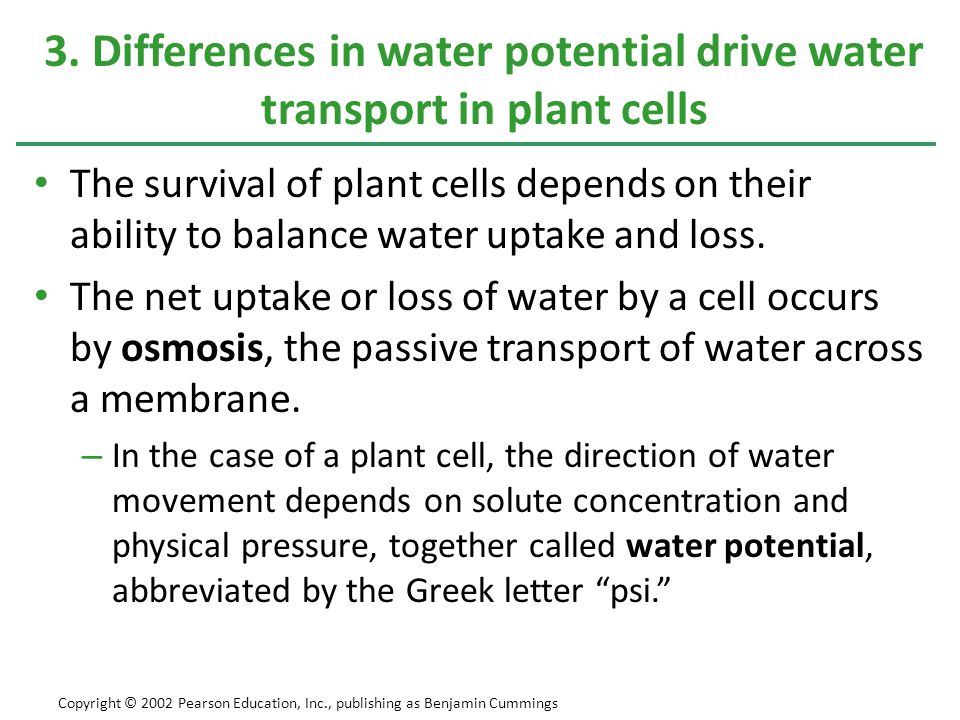 3. Differences in water potential drive water transport in plant cells