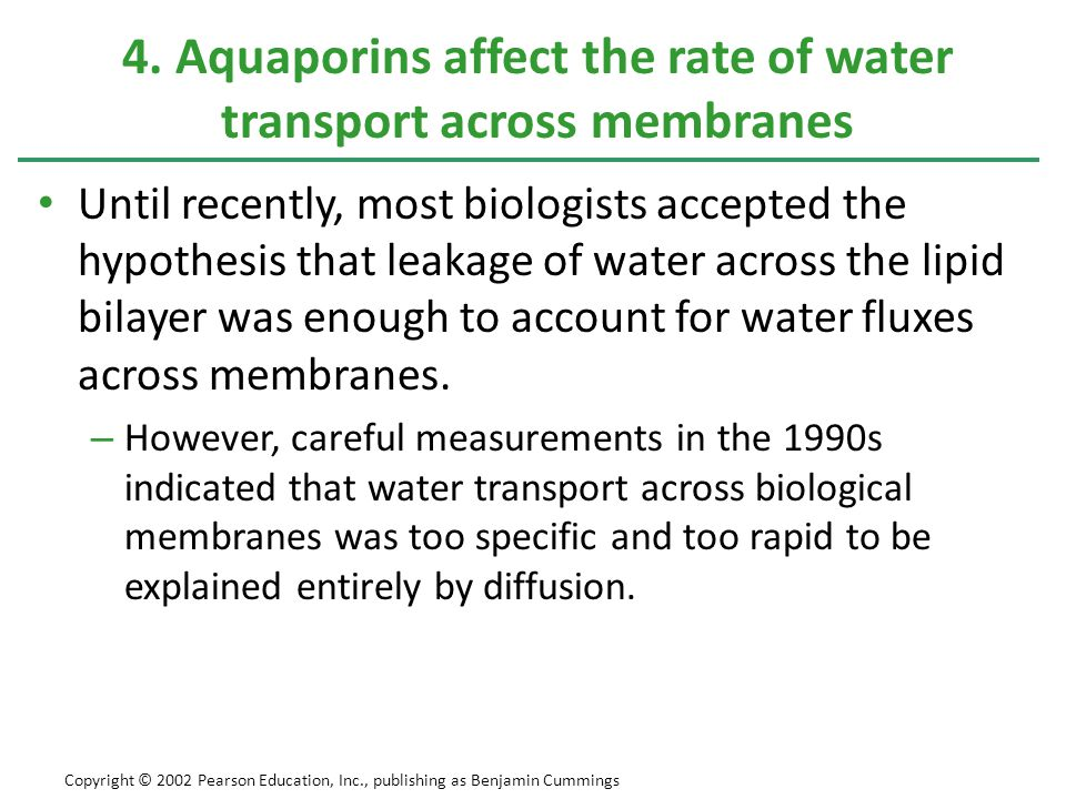 4. Aquaporins affect the rate of water transport across membranes