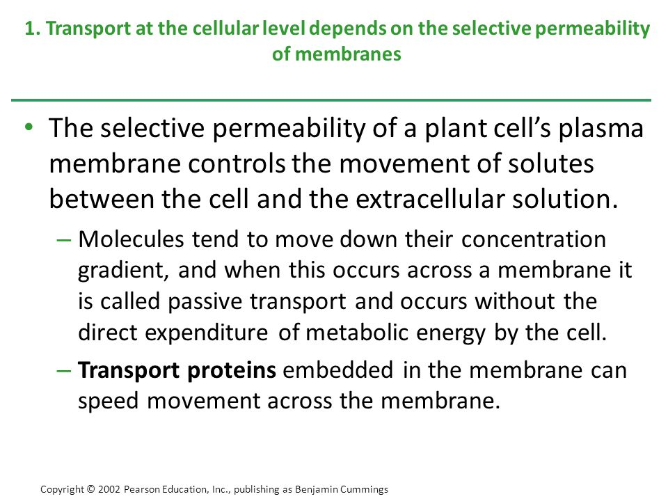 1. Transport at the cellular level depends on the selective permeability of membranes