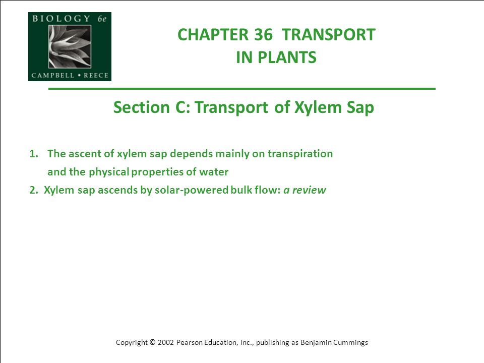 CHAPTER 36 TRANSPORT IN PLANTS Section C: Transport of Xylem Sap