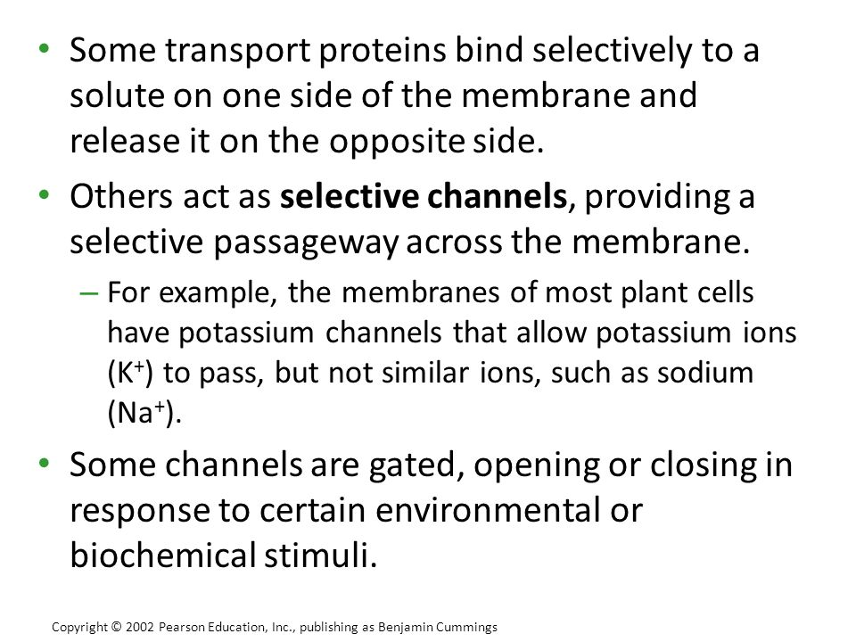 Some transport proteins bind selectively to a solute on one side of the membrane and release it on the opposite side.