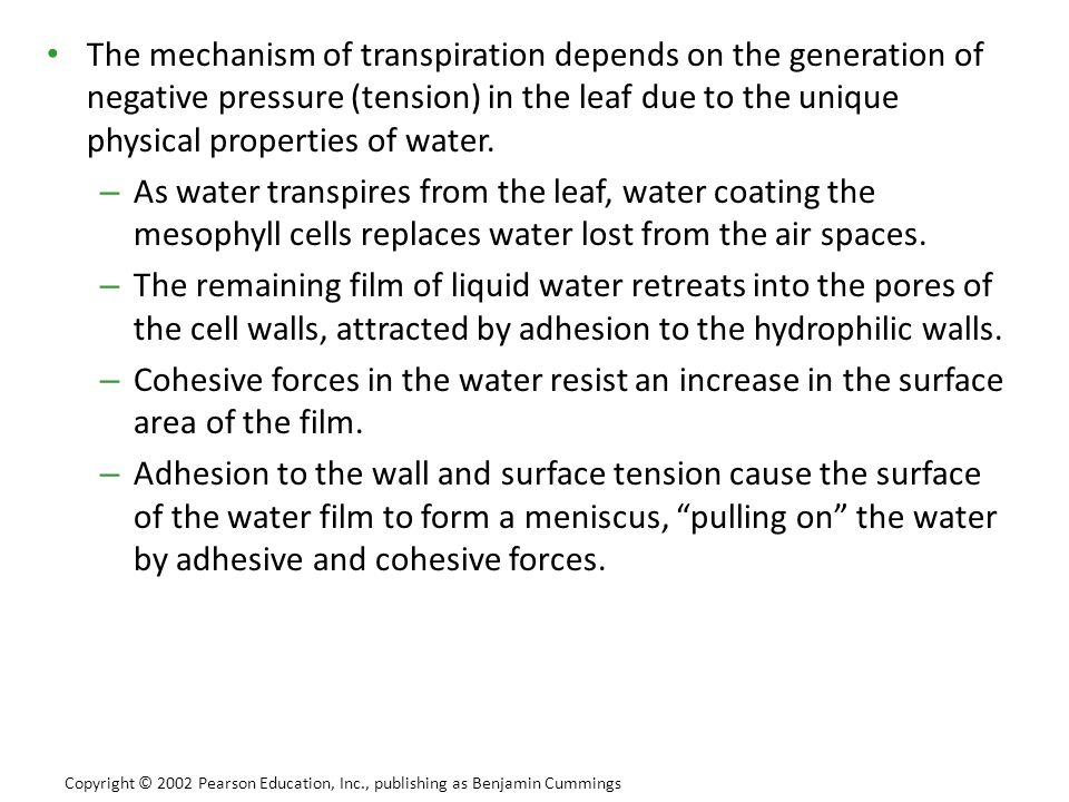 The mechanism of transpiration depends on the generation of negative pressure (tension) in the leaf due to the unique physical properties of water.