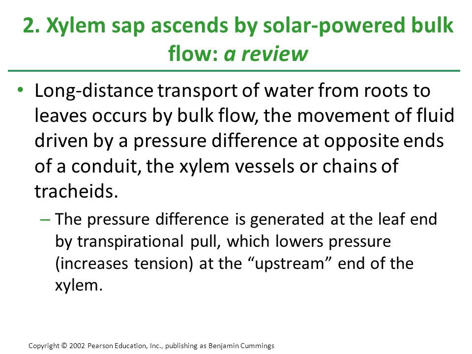 2. Xylem sap ascends by solar-powered bulk flow: a review