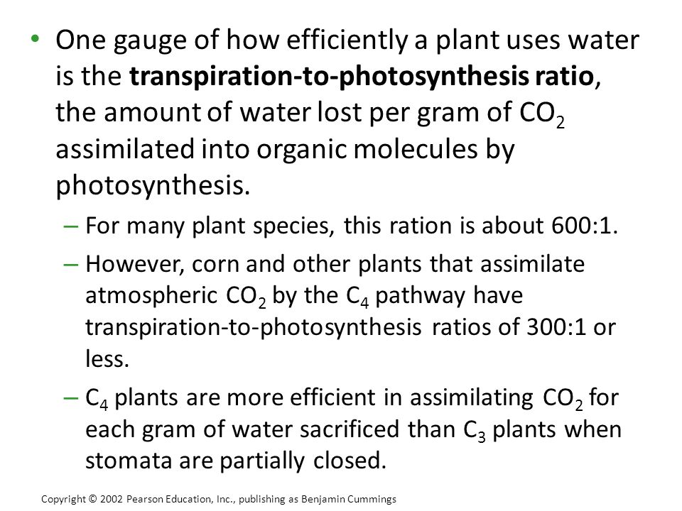 One gauge of how efficiently a plant uses water is the transpiration-to-photosynthesis ratio, the amount of water lost per gram of CO2 assimilated into organic molecules by photosynthesis.