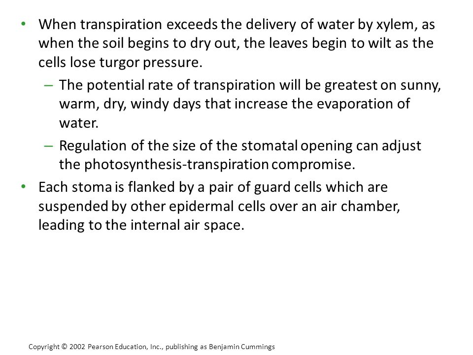 When transpiration exceeds the delivery of water by xylem, as when the soil begins to dry out, the leaves begin to wilt as the cells lose turgor pressure.
