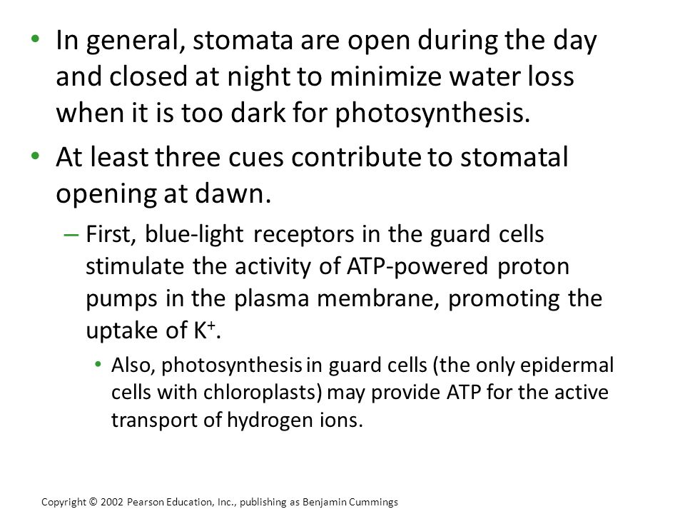 At least three cues contribute to stomatal opening at dawn.