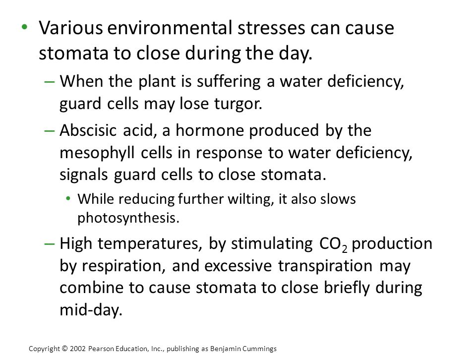 Various environmental stresses can cause stomata to close during the day.