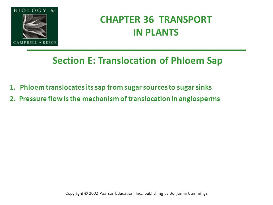 CHAPTER 36 TRANSPORT IN PLANTS Section E: Translocation of Phloem Sap