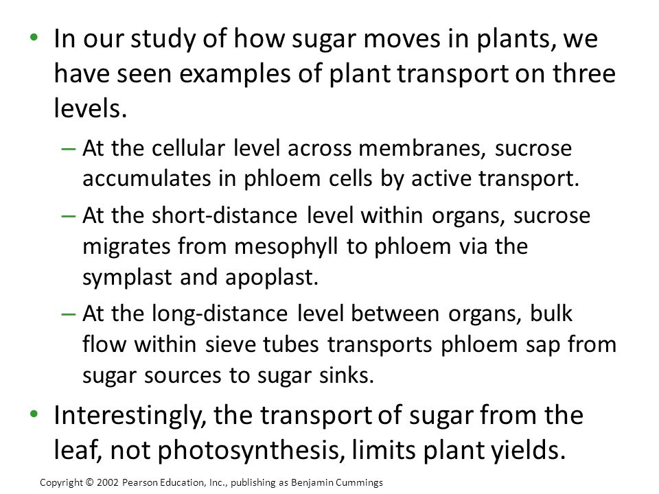 In our study of how sugar moves in plants, we have seen examples of plant transport on three levels.