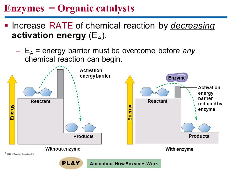 Enzymes = Organic catalysts