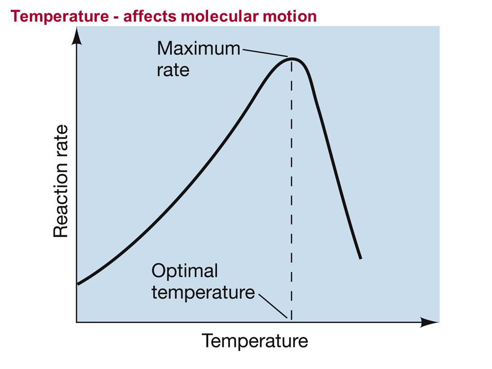Temperature - affects molecular motion