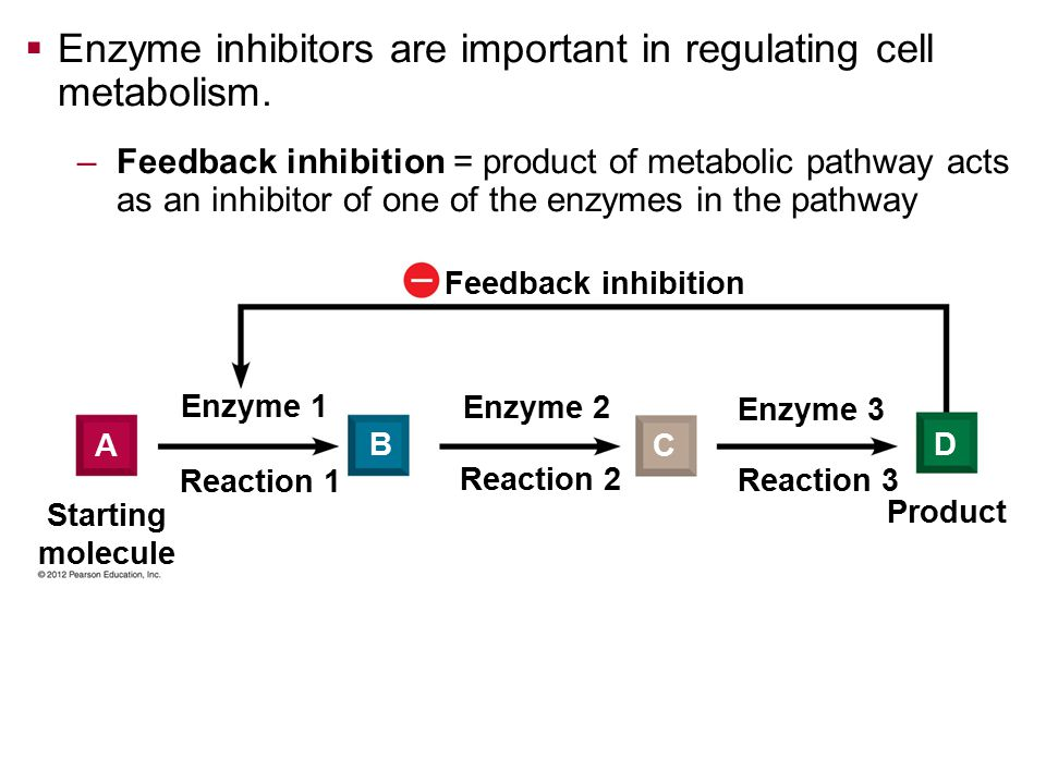 Enzyme inhibitors are important in regulating cell metabolism.