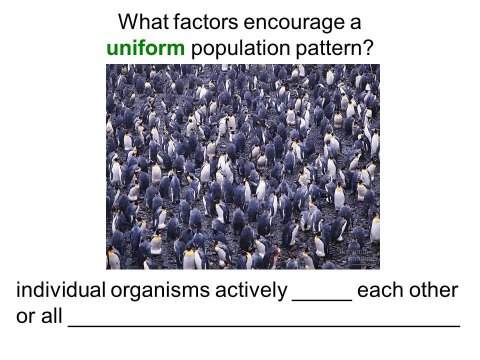 What factors encourage a uniform population pattern