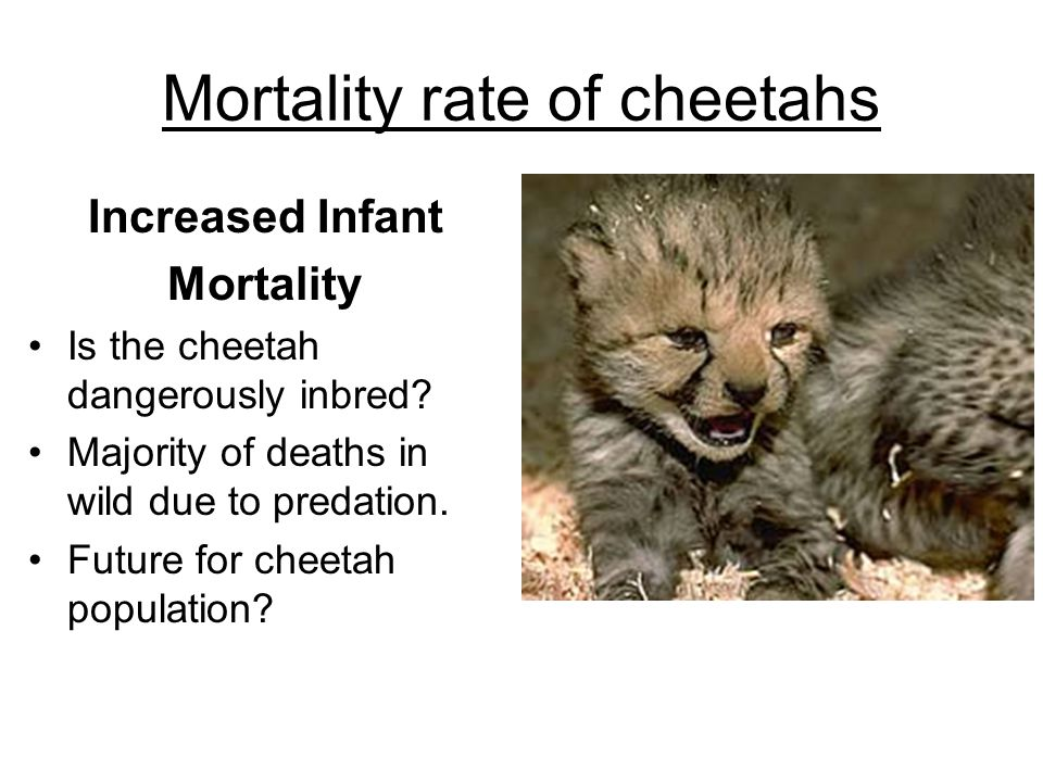 Mortality rate of cheetahs