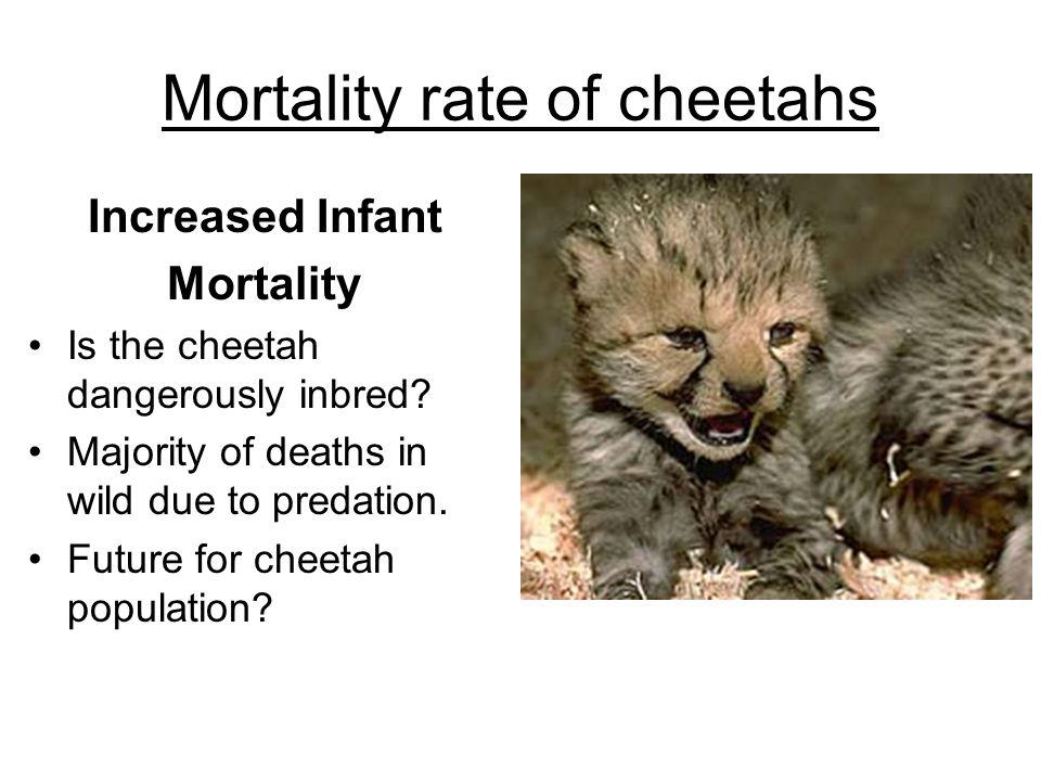 Mortality rate of cheetahs