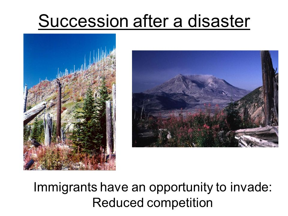 Succession after a disaster