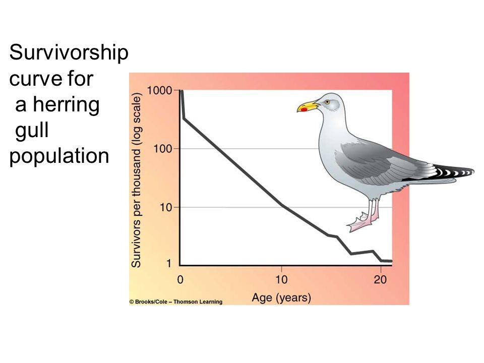 Survivorship curve for a herring gull population