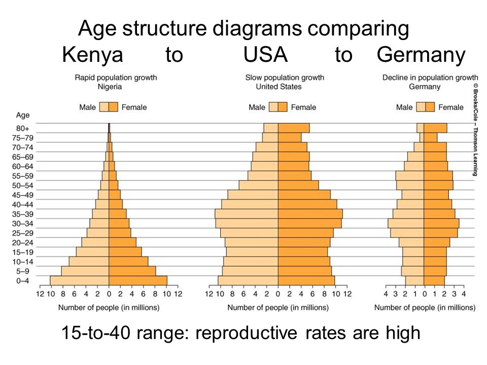 15-to-40 range: reproductive rates are high