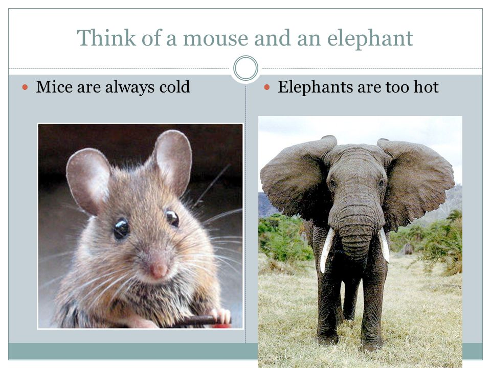 Think of a mouse and an elephant