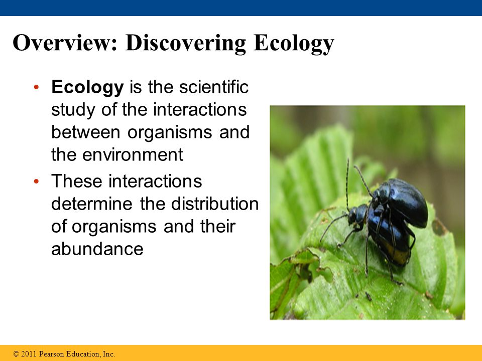 Overview: Discovering Ecology