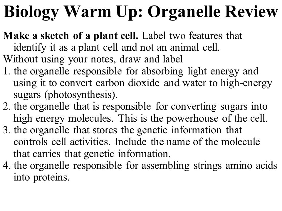 Biology Warm Up: Organelle Review
