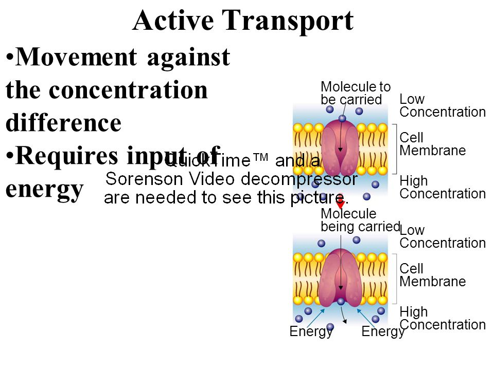 Active Transport Movement against the concentration difference