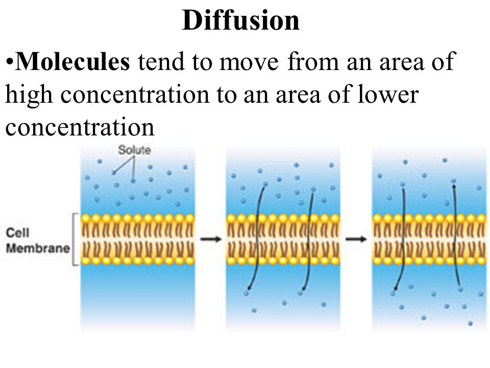 Diffusion Molecules tend to move from an area of high concentration to an area of lower concentration.