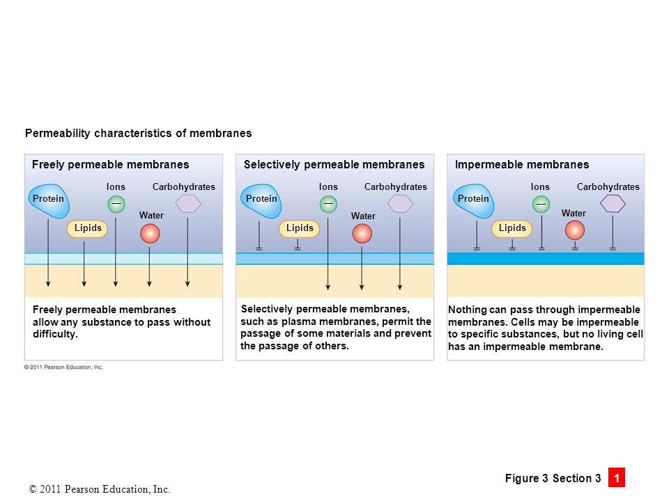 Permeability characteristics of membranes