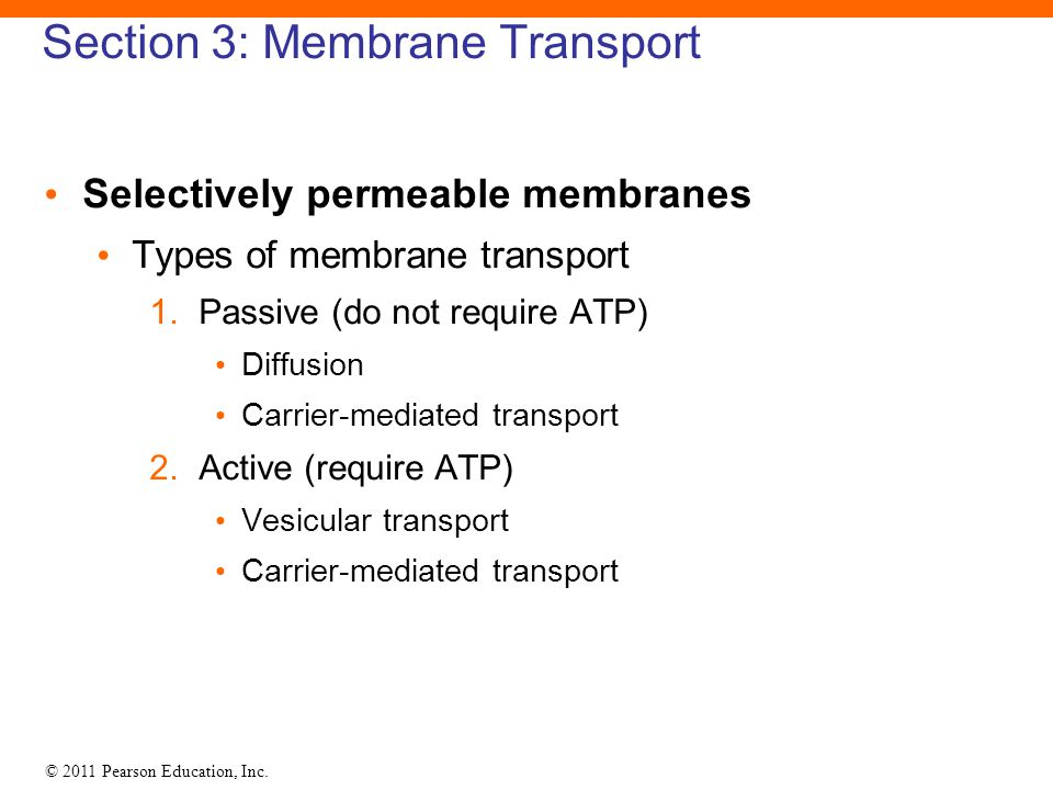 Section 3: Membrane Transport