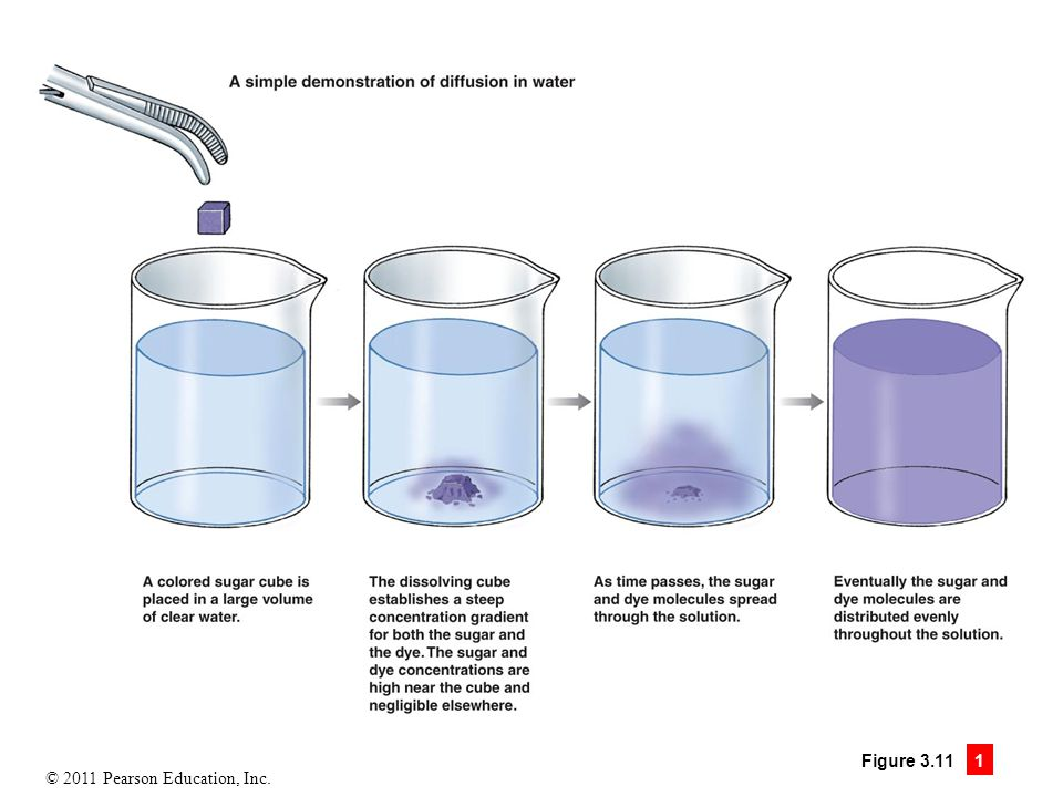Figure 3.11.1 Diffusion is movement driven by concentration differences