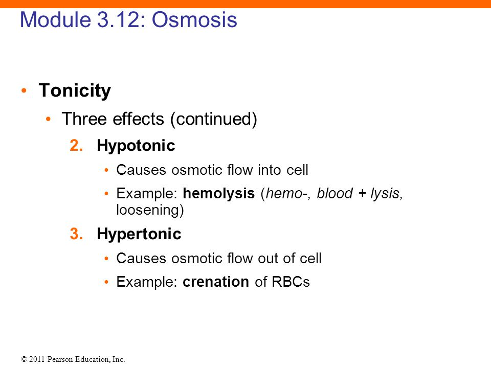 Module 3.12: Osmosis Tonicity Three effects (continued) 2. Hypotonic